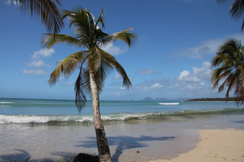 plage de palmiers